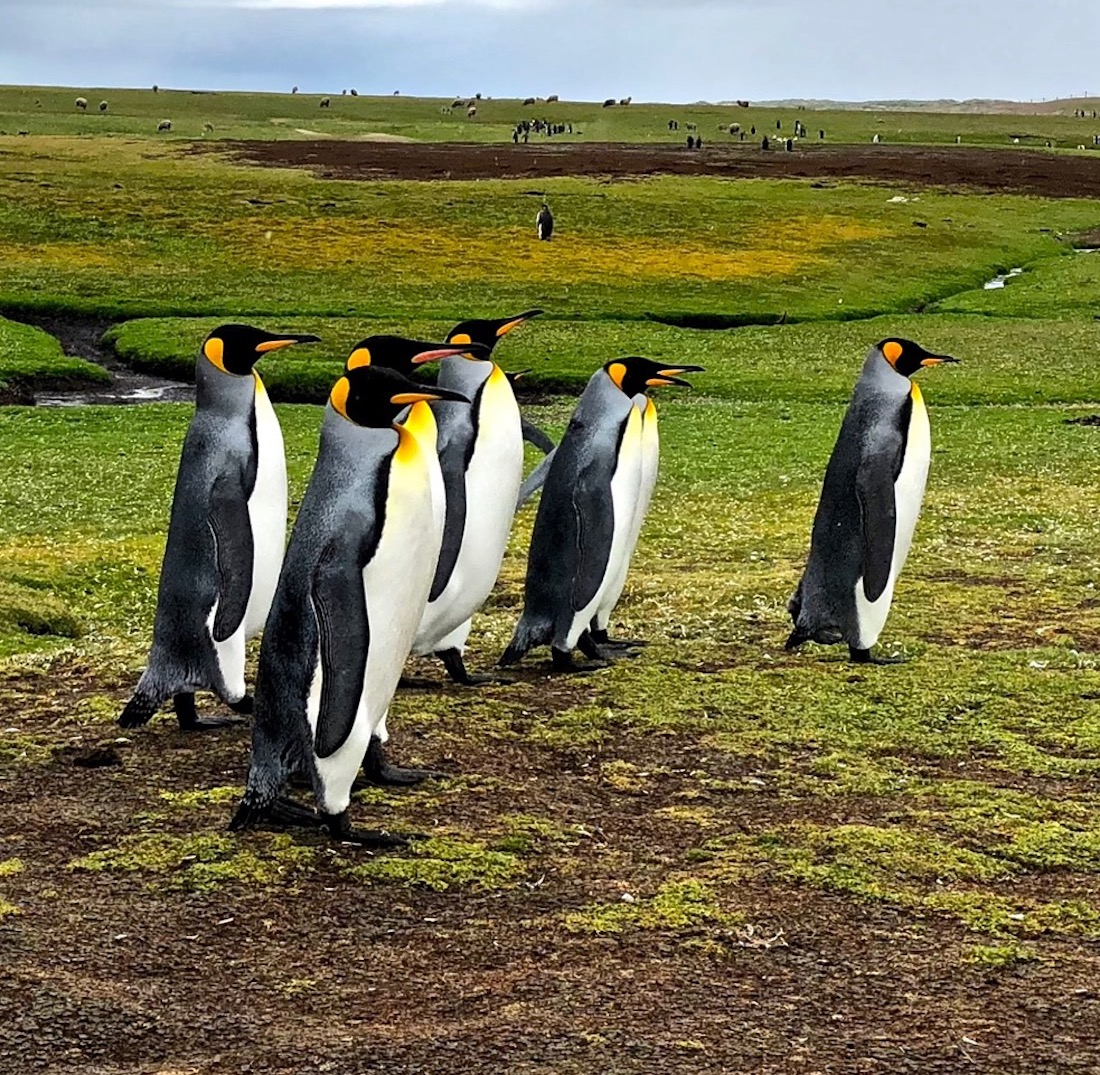 Falkland Islands iPhone video & photo
